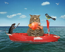 A Beige Cat Fisherman In A Red Row Boat Caught A Gold Fish In The Sea.