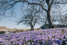 A Large Purple Flower Is In A Garden