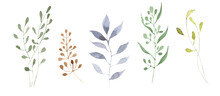 Hand Painted Watercolor Botanical Set. Collection Of Isolated Wild Herbs On White Background