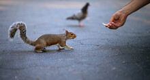 Person Feeding Squirrel In The City