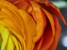Yellow And Orange Gradient On Flower