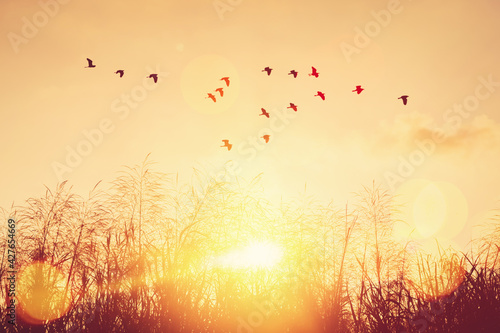 Cuadros en Lienzo Birds flying and grass flower on sunset sky and cloud abstract background