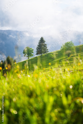 Foggy mountains and field with trees. Landscape after rain. A view for the background. Nature mage. Spring landscape.