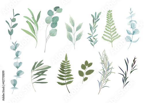 Slika na platnu Floral greenery set with eucalyptus branch. Vector illustration