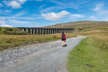 A Female Hiker On The Way To Whernside Peak, Ribblehead Viaduct, Yorkshire Tree Peaks Challenge.