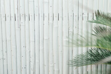Close-up Of Palm Leaves Against Wall