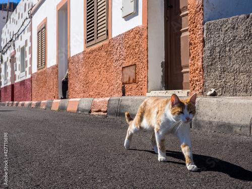 Kot, Gran Canaria - fototapety na wymiar