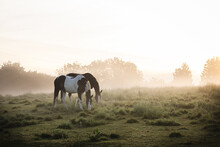 Two Horses Grazing In A Meadow Surrounded By Mist