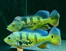 Close-up Of Fish Swimming Aquarium