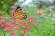Schmetterling 849