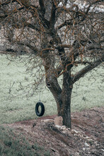 Swing Made From An Old Tire Hung From A Tree