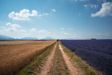 Scenic View Of Dirt Road And Fields Against Sky