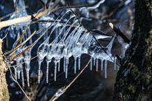 Close-up Of Icicles On Tree Trunk During Winter