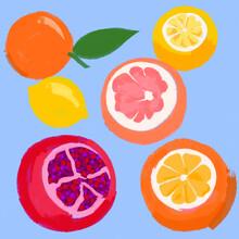 Summer Fresh Fruit Drawing. Illustrations Of Citrus (orange, Lemon, Grapefruit) And A Pomegranate.