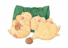 Two Funny Sleeping Hamsters