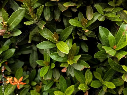 Fondo de hojas verdes con sombras y flores rojas
