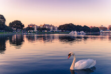Swan Swimming In Lake Against Sky During Sunset