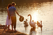 Couple Standing On Lakeshore By Swans Swimming In Water During Sunset