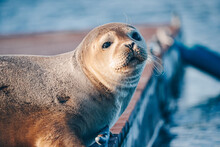 Oceanfront Seal