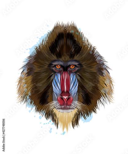 Fotografia Monkey Mandrill head portrait from a splash of watercolor, colored drawing, realistic