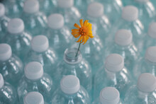 Close-up Of Yellow Flower On Plastic Bottles