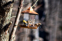 Close-up Of Two Birds On A  Bird Feeder
