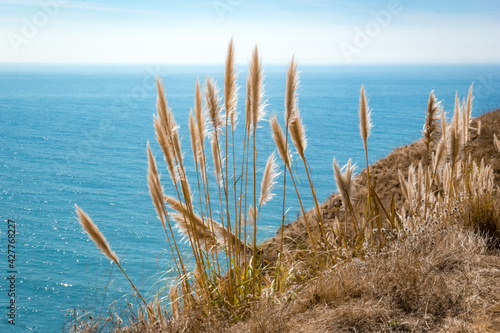 Valokuvatapetti Pampas Grass At The Pacific Coast Highway, California
