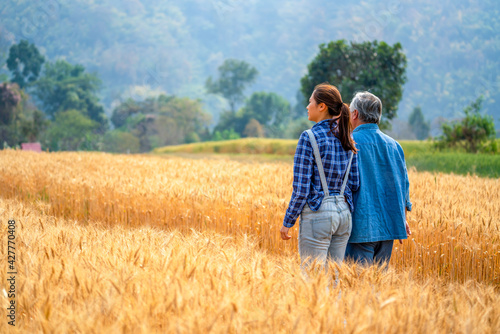 Fotografiet Asian woman and senior man farmer walking and working in rice paddy wheat field farmland together