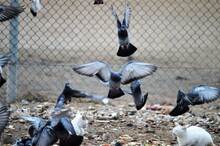 View Of Pigeons And Birds