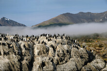 Group Of Cormorants In The Morning.