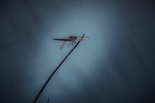 Dragonfly Resting On A Small Branch