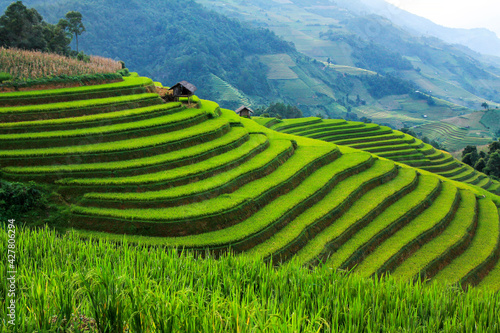 Obraz na plátně Rice Fields On Terraced In Rainny Season At Mu Cang Chai, Yen Bai, Northwest Vie