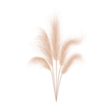 Pampas Grass Collection. Floral Ornament Elements In Boho Style. Vector Illustration Isolated On White Background. Trendy Design For Wedding Invitations, Postcards, Interior Or Flower Arrangements.
