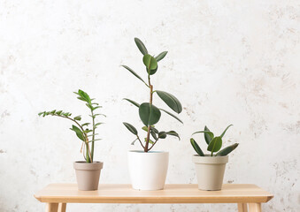 Table with different houseplants on light background