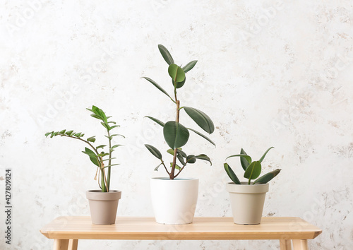 Table with different houseplants on light background - fototapety na wymiar