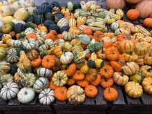 Farmers Market Gourds