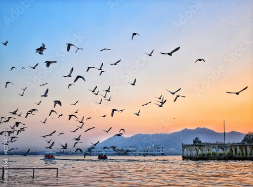Fototapeta Flock Of Birds Flying Over Sea