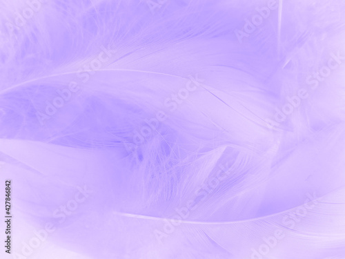 Obraz na plátně Beautiful abstract purple feathers on white background, black feather texture on