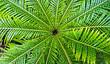 tropical fern leaf,  light and shadow, karibik feeling
