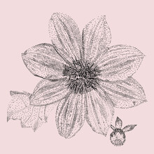 Vector Illustration Of Flower  Pointillist Style Graphics, Black And White. Image With Dahlia, Leaf, Buds. Stock Illustration.