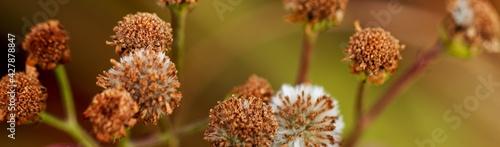 Obraz na plátně Close-up Of Wilted Flowers Against Blurred Background