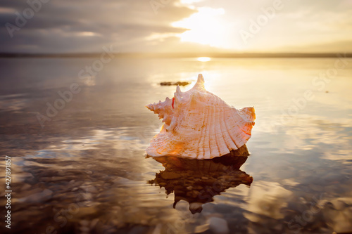 Fotografie, Obraz conch sea shell laying at the beach at sunset