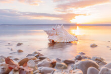 Conch Sea Shell Laying At The Beach At Sunset
