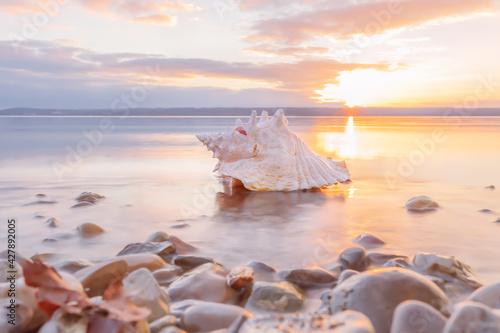 Slika na platnu conch sea shell laying at the beach at sunset