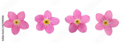 Slika na platnu Set with beautiful tender forget me not flowers on white background