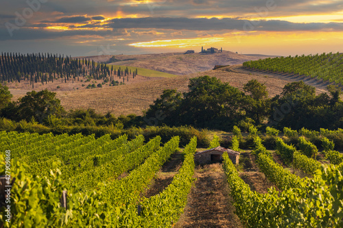 Tuscany's most famous vineyards near town Montalcino in Italy