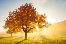 Sunrays Through Tree On Foggy Autumn Morning
