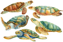 Set Of Sea Turtle On An Isolated White Background. Watercolor Drawing