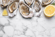 Fresh Oysters With Lemon And Rosemary On White Marble Table, Flat Lay. Space For Text