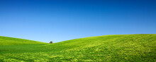 Spring Landscape Background With Blue Sky And Green Grass Field.